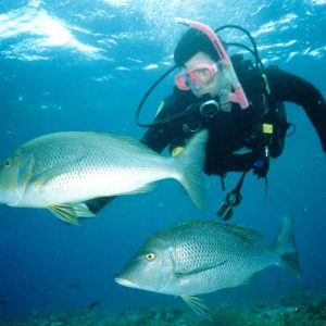 5 days abrolhos islands tours