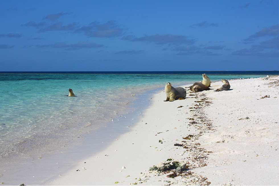 Abrolhos Island Tours