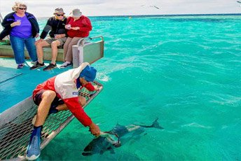 feeding fish at the abrolhos islands