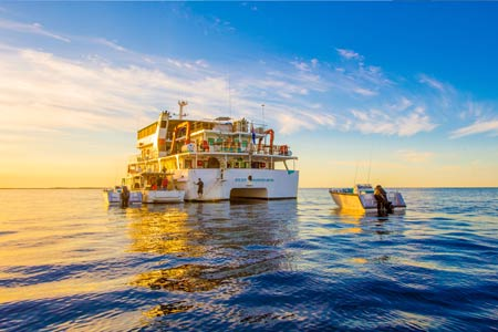 abrolhos island cruises