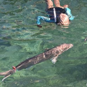 Snorkelling with Sampson Fish at Basille Island