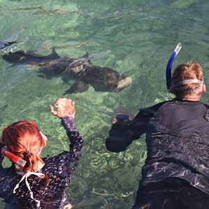 Swimming with Sampson Fish at Basille Island