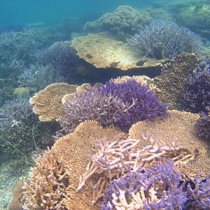 Coral at the Abrolhos Islands