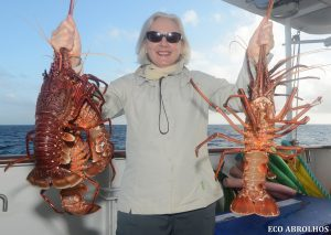 Crayfish on the Eco Abrolhos