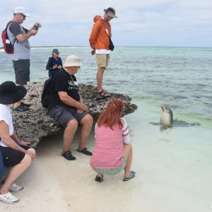 Sea Lion checking out the Eco ABrolhos Guests at the Abrolhos Islands