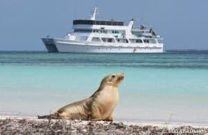 Sea Lion & the Eco Abrolhos