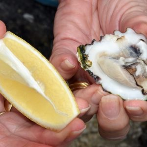 Fresh Oyster off the rocks at the Abrolhos Islands