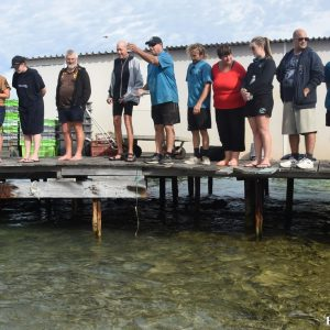 Amberjack fish feed at the Abrolhos Islands