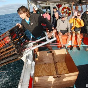 Cray Pot pulling on the King Diver at the Abrolhos Islands