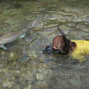 Snorkelling with Amberjacks at the Abrolhos Islands
