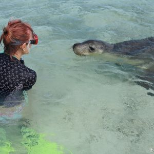 Guest in water experience with Sea Lion at the Abrolhos Islands