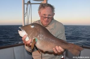Bald Chin Groper at the ABrolhos Islands