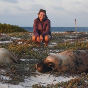 Sea Lions at the Abrolhos Islands