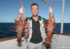 Crayfish at the Abrolhos Islands