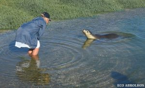 Curious Sea Lion at the Abrolhos Islands