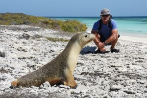 Sea Lion at the Abrolhos Islands