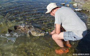 Cod Feeding at the Abrolhos Islands