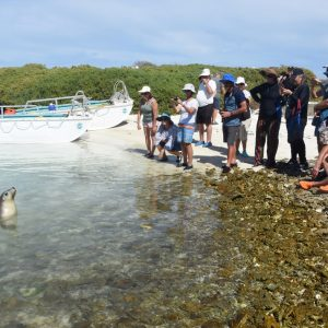 Guests watching a sea lion at the Abrolhos Islands