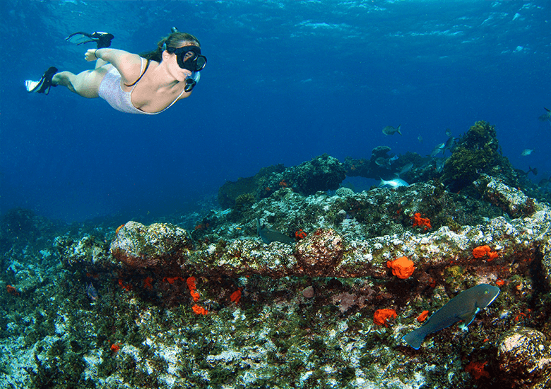 Batavia Shipwreck Snorkeling Adventure