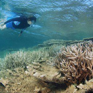 Snorkeling Abrolhos Island Reef