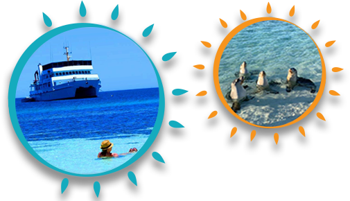 ECO-ABROLHOS-SUMMER-TOURS-BANNER-BOAT